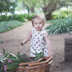 The Harry Overalls – Banksia